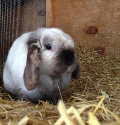 rabbit emarketing facebook