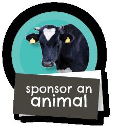 Sponsor an animal